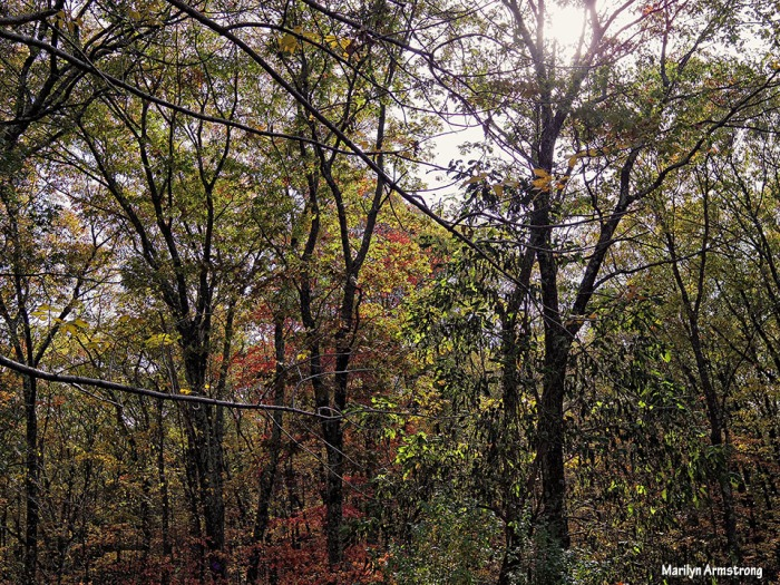 72-Autumn-Light-1027_31