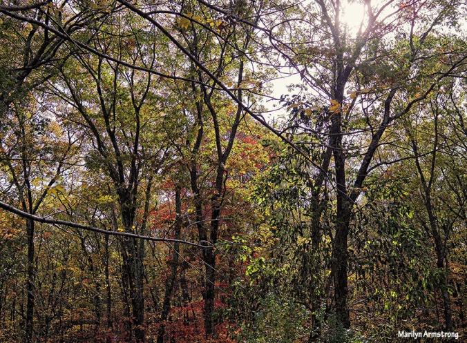 72-Autumn-Light-1027_32