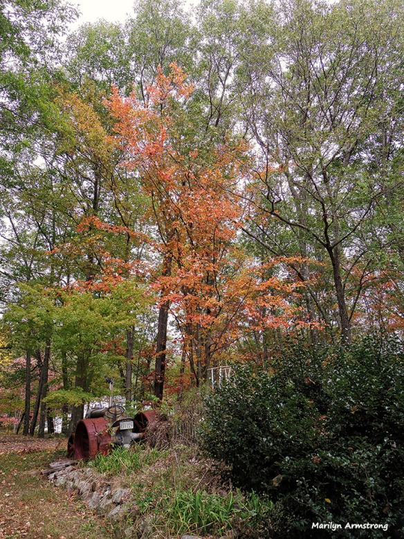 72-Autumn-MA--1009_021