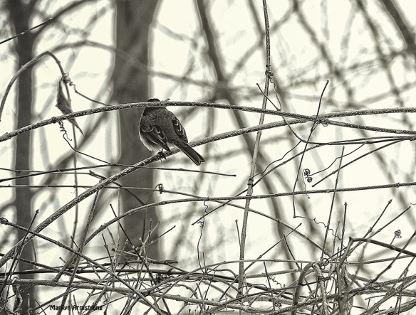 Little bird in the thicket