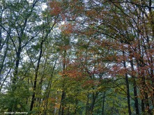 72-Canopy-Autumn-100815_010