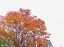 72-CCY-Aldrich-Foliage-1013_010