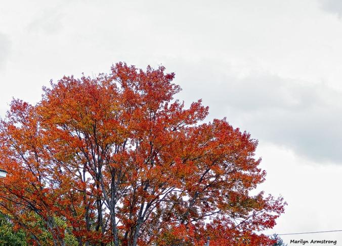 72-CCY-Aldrich-Foliage-1013_011