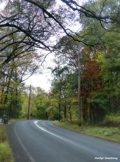 72-CCY-Aldrich-Foliage-1013_028