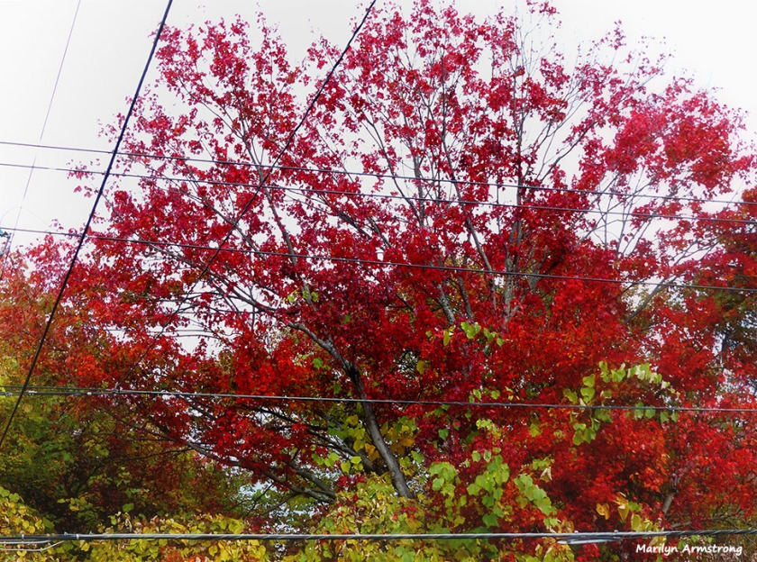 72-CCY-Foliage-1013_018