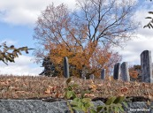 72-Cemetary-Autumn-Uxbridge-GA_052