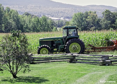 Corn being cut in the fall