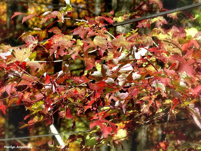 72-Deck-Foliage-1014_003