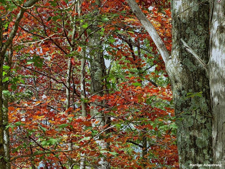 72-Deck-Foliage-1014_004