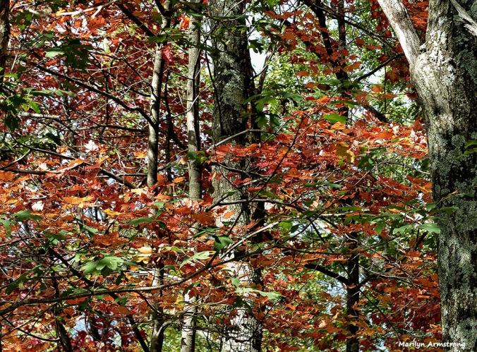72-Deck-Foliage-1014_005