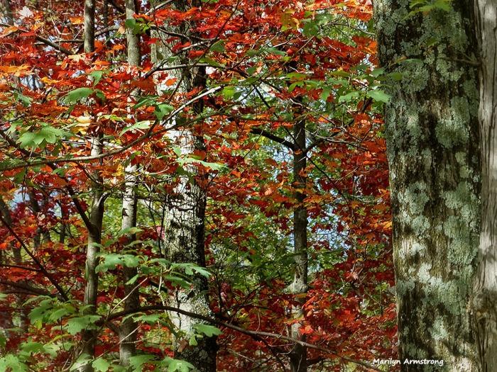72-Deck-Foliage-1014_006