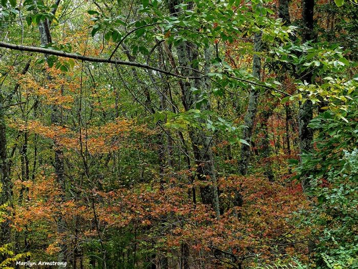 72-Deck-Foliage-1014_019