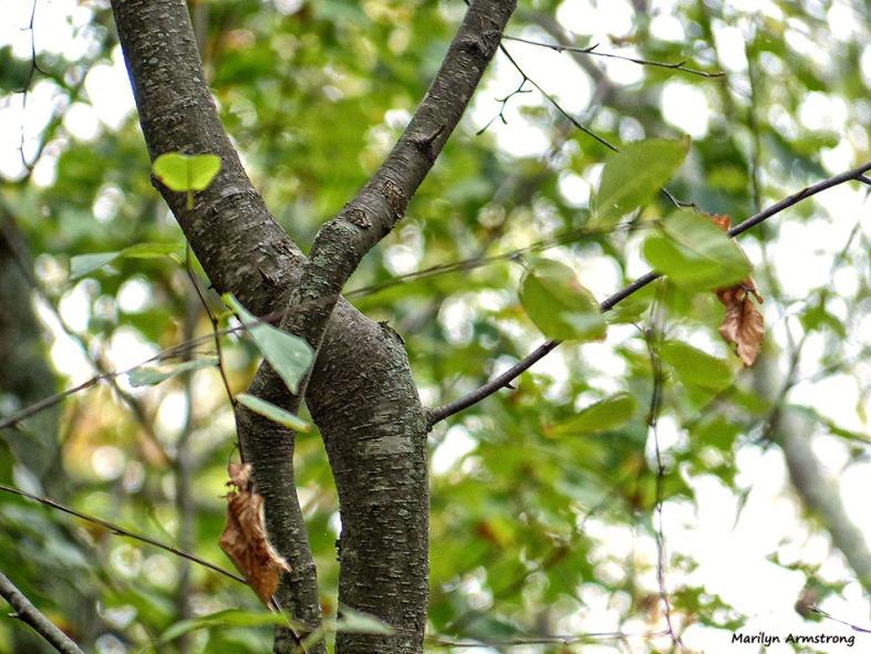 72-Deck-Foliage-1014_025