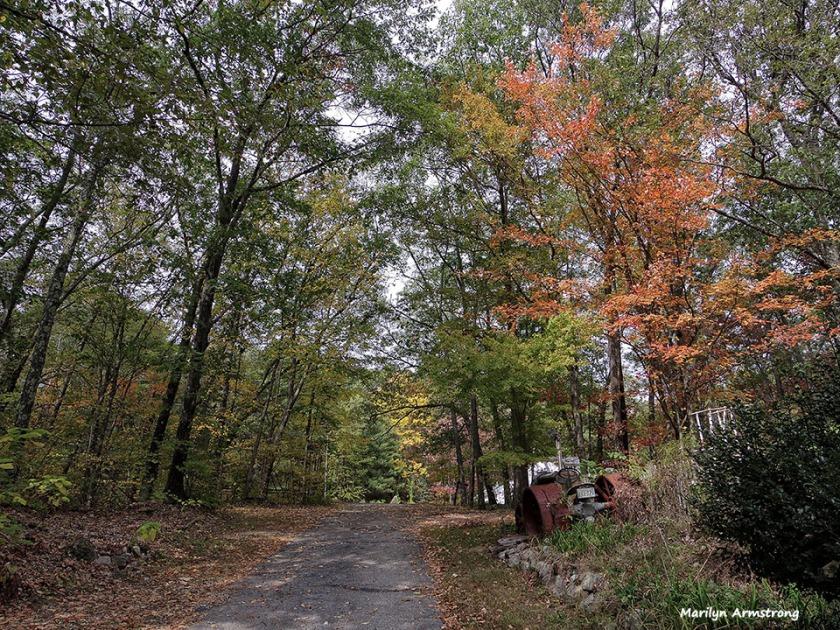 72-Driveway-Autumn-MA--1009_026