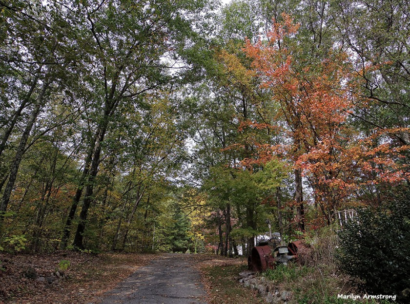 72-Driveway-Autumn-MA--1009_028