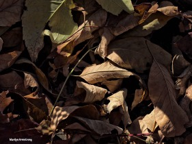 72-fallen-leaves-foliage-1026_049
