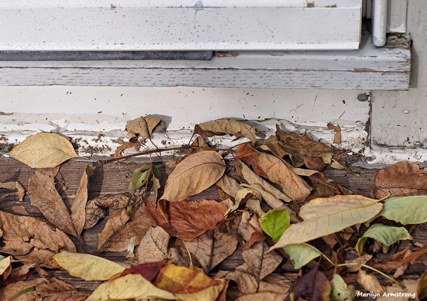 72-fallen-leaves_04