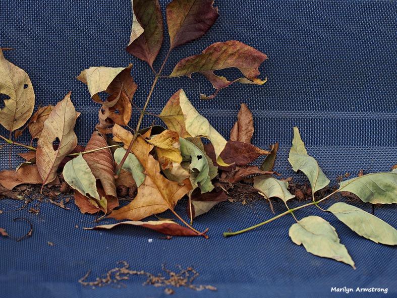 72-fallen-leaves_06
