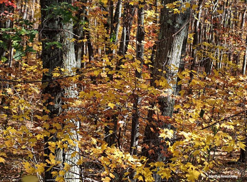 72-foliage-1026_039
