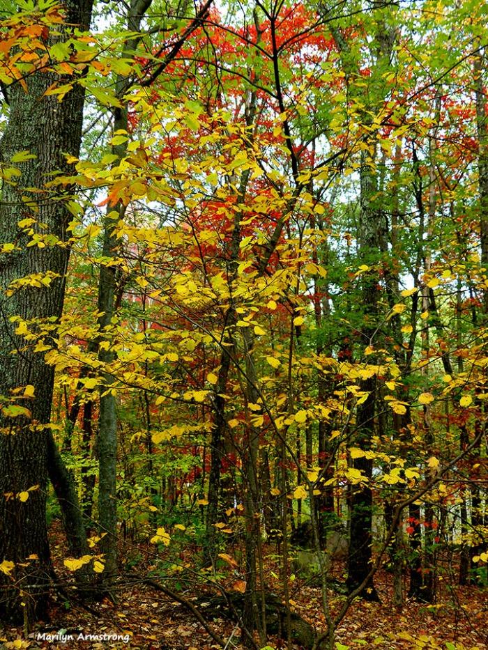 72-Home-Foliage-1013_026