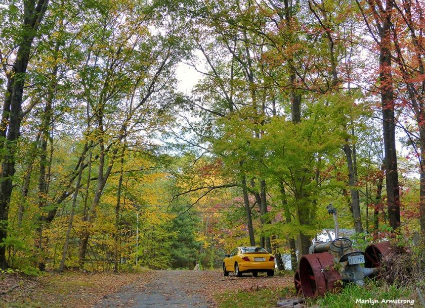 72-Home-Foliage-1013_038
