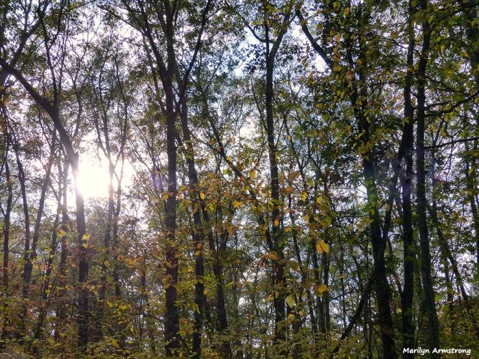 72-Home-Foliage-1013_042