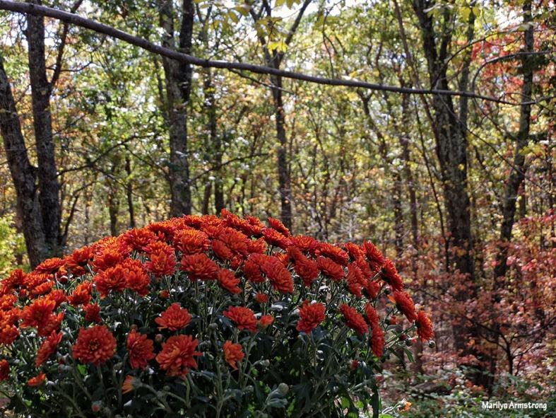 72-Mums-Autumn-Home-1023_001