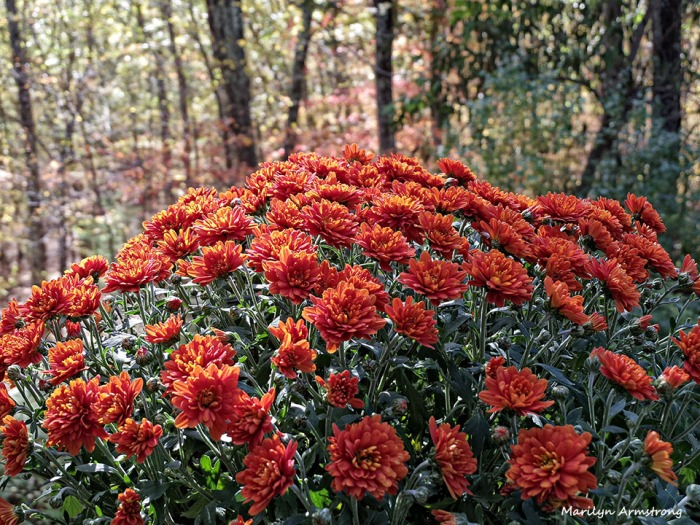 72-Mums-Autumn-Home-1023_014
