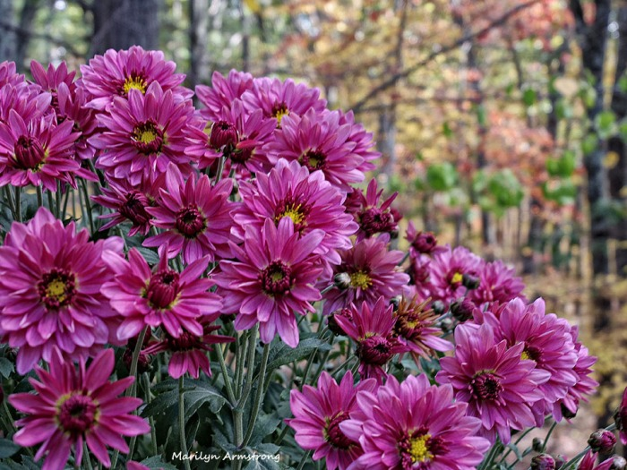 72-Mums-Autumn-Home-1023_017