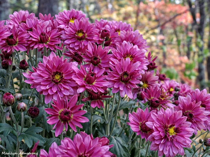 72-Mums-Autumn-Home-1023_019