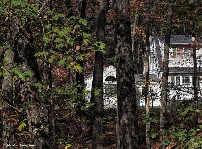 72-oak-wood-autumn-pict-window_002