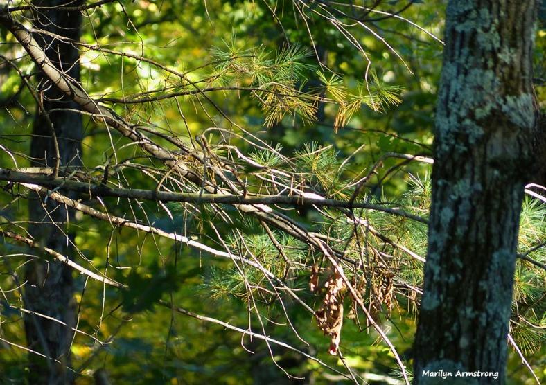 72-Pines-October-10_023