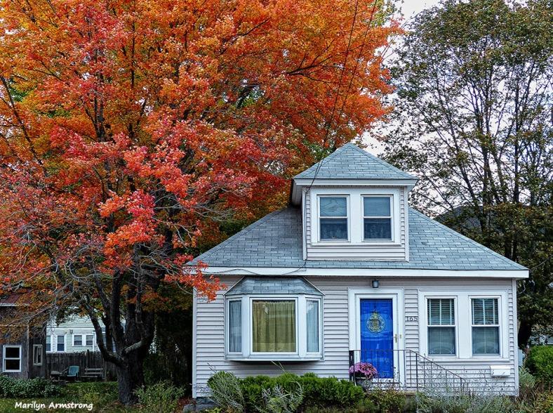 72-Red-Tree-Foliage-1013_005