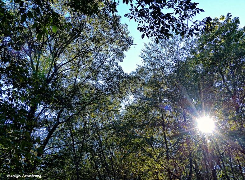 72-Sunshine-October-10_004