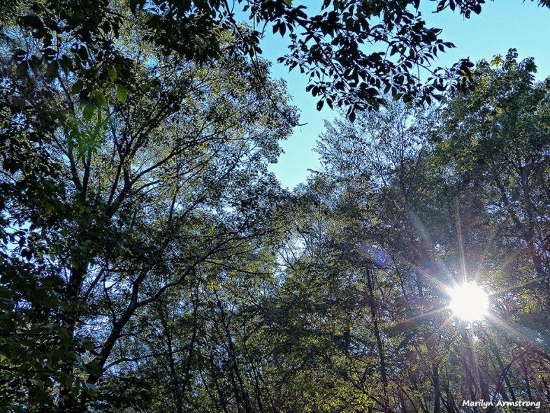 72-Sunshine-October-10_005