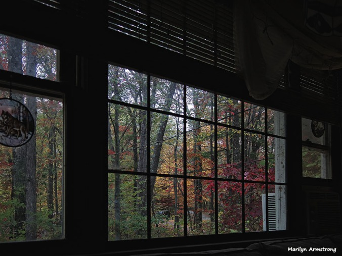 72-Window Dressing_04