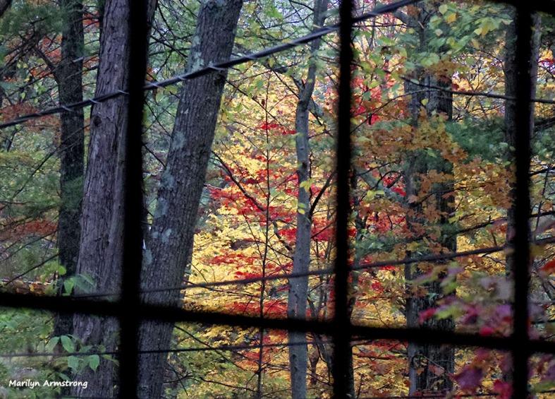 72-Window-Foliage-1013_045