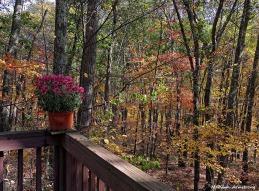 72-Woods-Mums-Autumn-Home-1023_011
