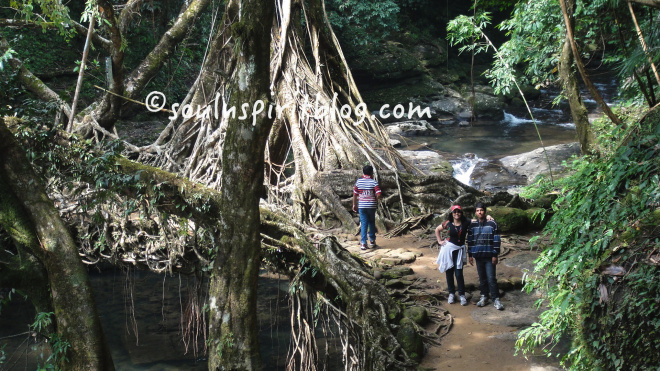 Stones and banyan tree roots provide strongest path to cross rivers and streams.