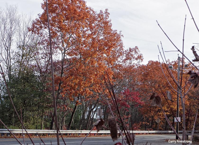 72-Autumn-Garry-1031_001