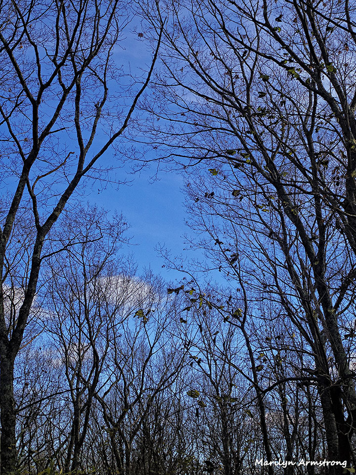 72-Bare-Trees-111415_10