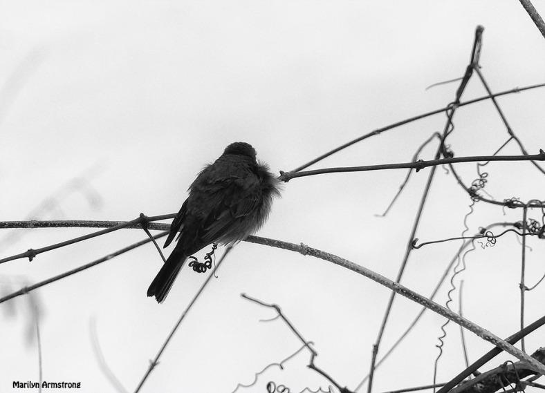72-BW-Cold-Birds-II_053