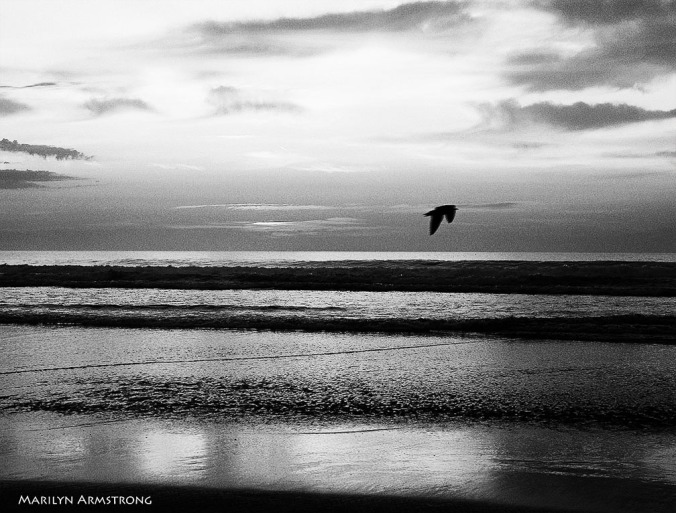 72-BW-Free-Bird-Dawn_1