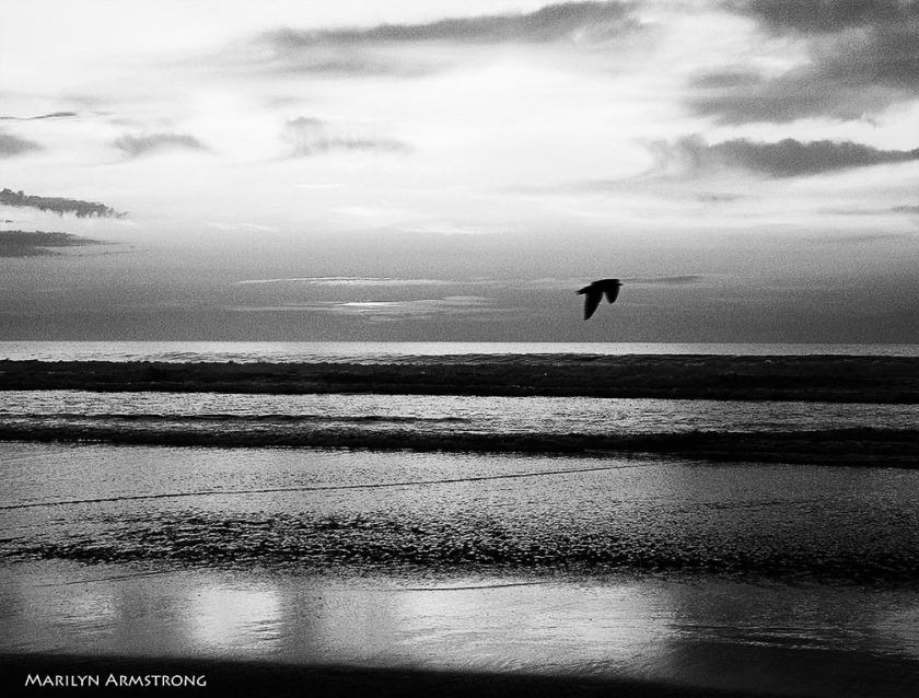 72-BW-Free-Bird-Dawn_1