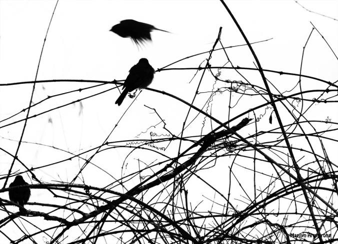 72-BW-Silhouette-Birds-II_055