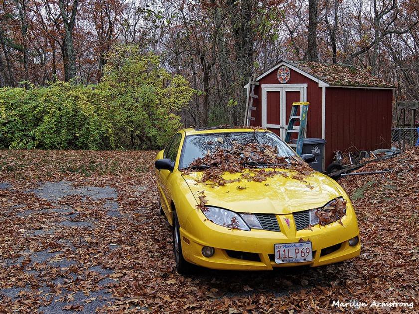 72-Driveway-Fallen-Leaves-1105014_