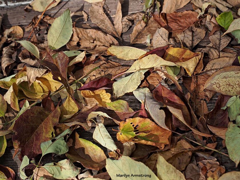 72-dry-leaves-112215_32