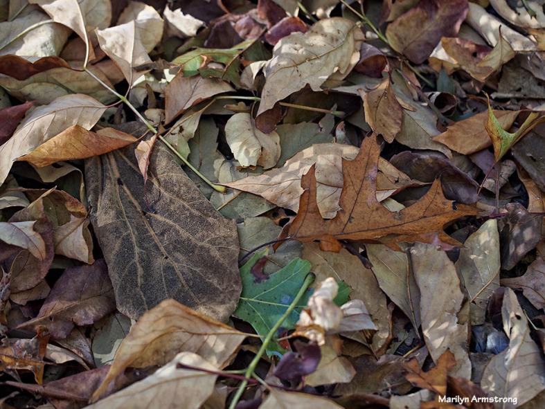 72-dry-leaves-112215_43