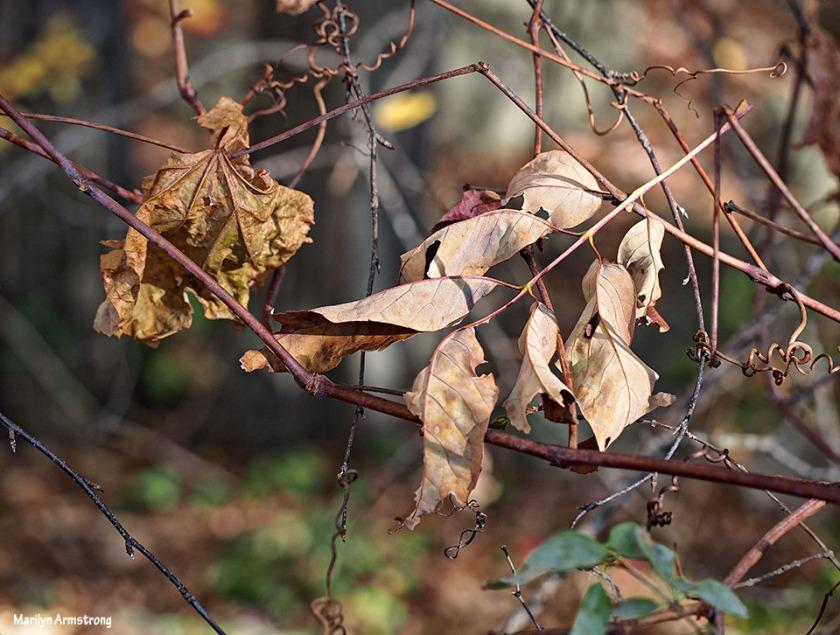 72-dry-leaves-foliage-1026_034