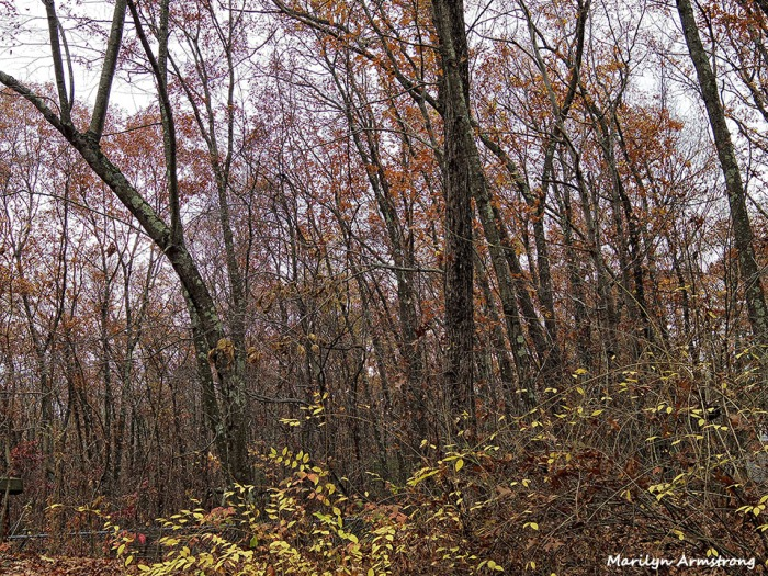 72-Fallen-Leaves-1105021_
